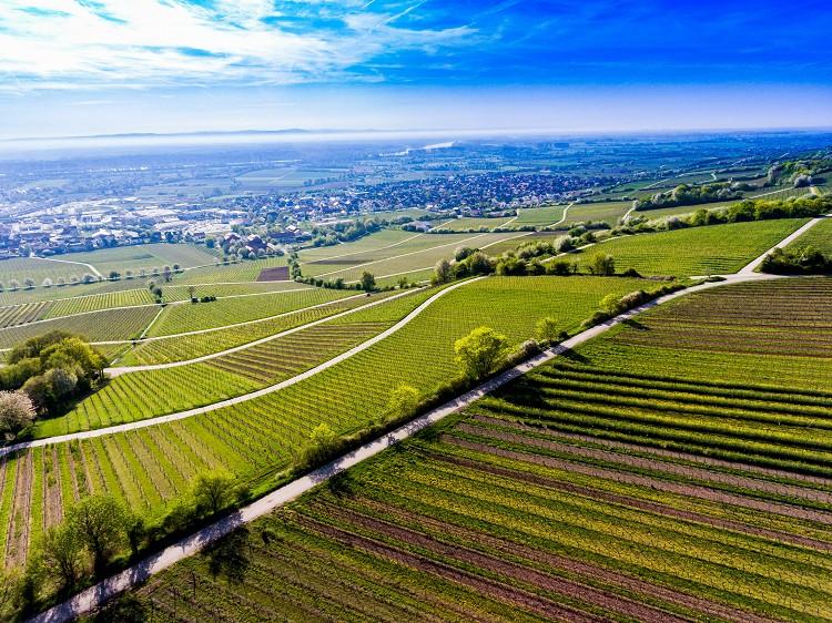 Größte Weingüter Deutschlands