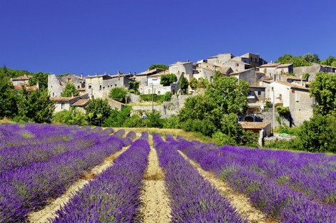 k-Provence_Lavendel_Haeuser